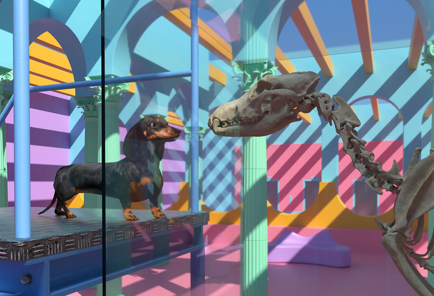 CGI Dog & wolf skeleton
